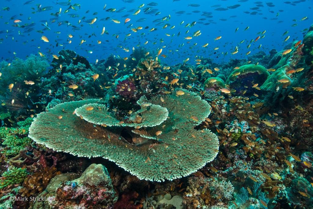 Reefscape, Raja Ampat
