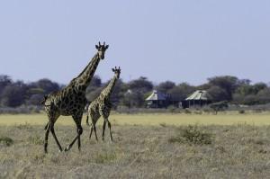 Kalahari_2012-06-11