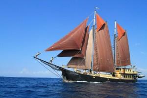 Adelaar Full Sail