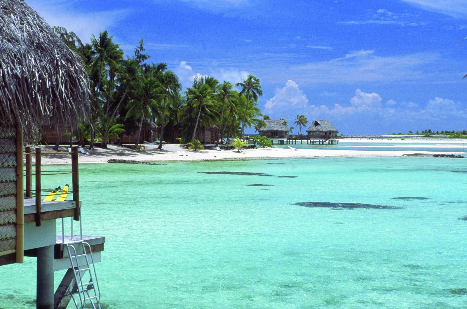 Tikehau Pearl Beach Resort  Reef and Rainforest